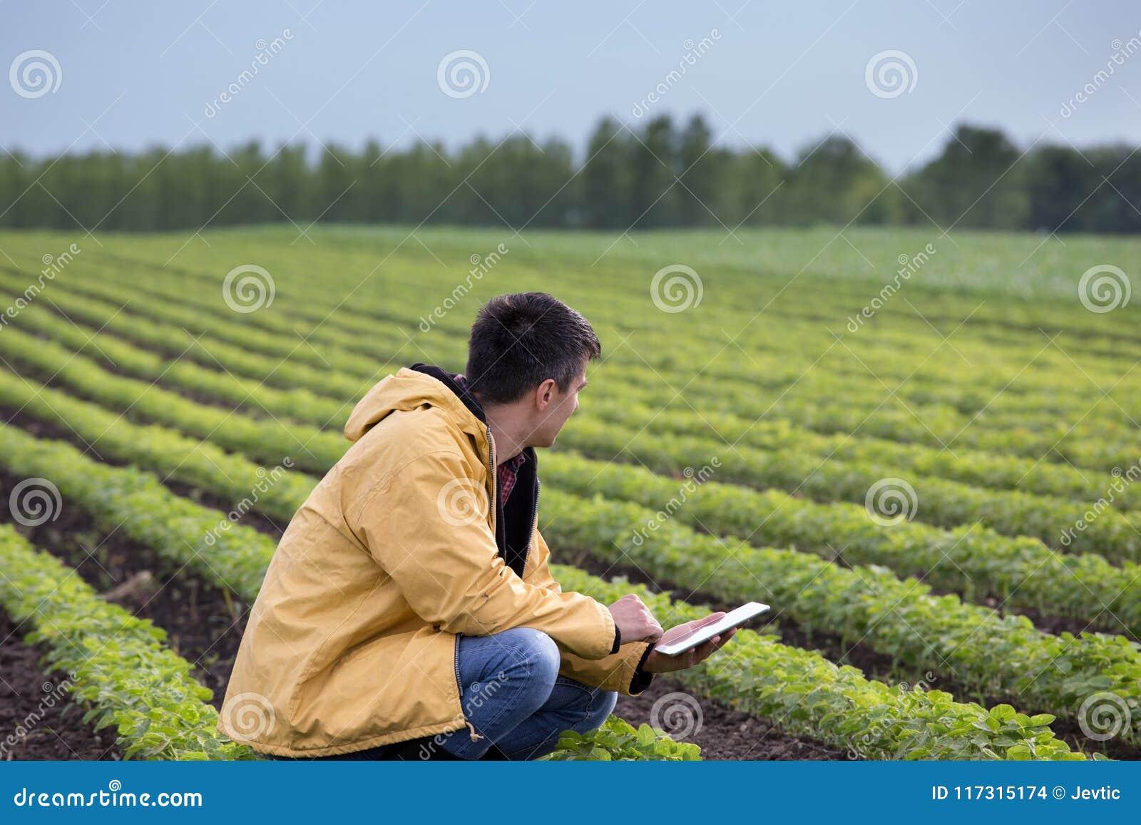 Fazendeiro com a tabuleta no campo do feijão de soja na mola