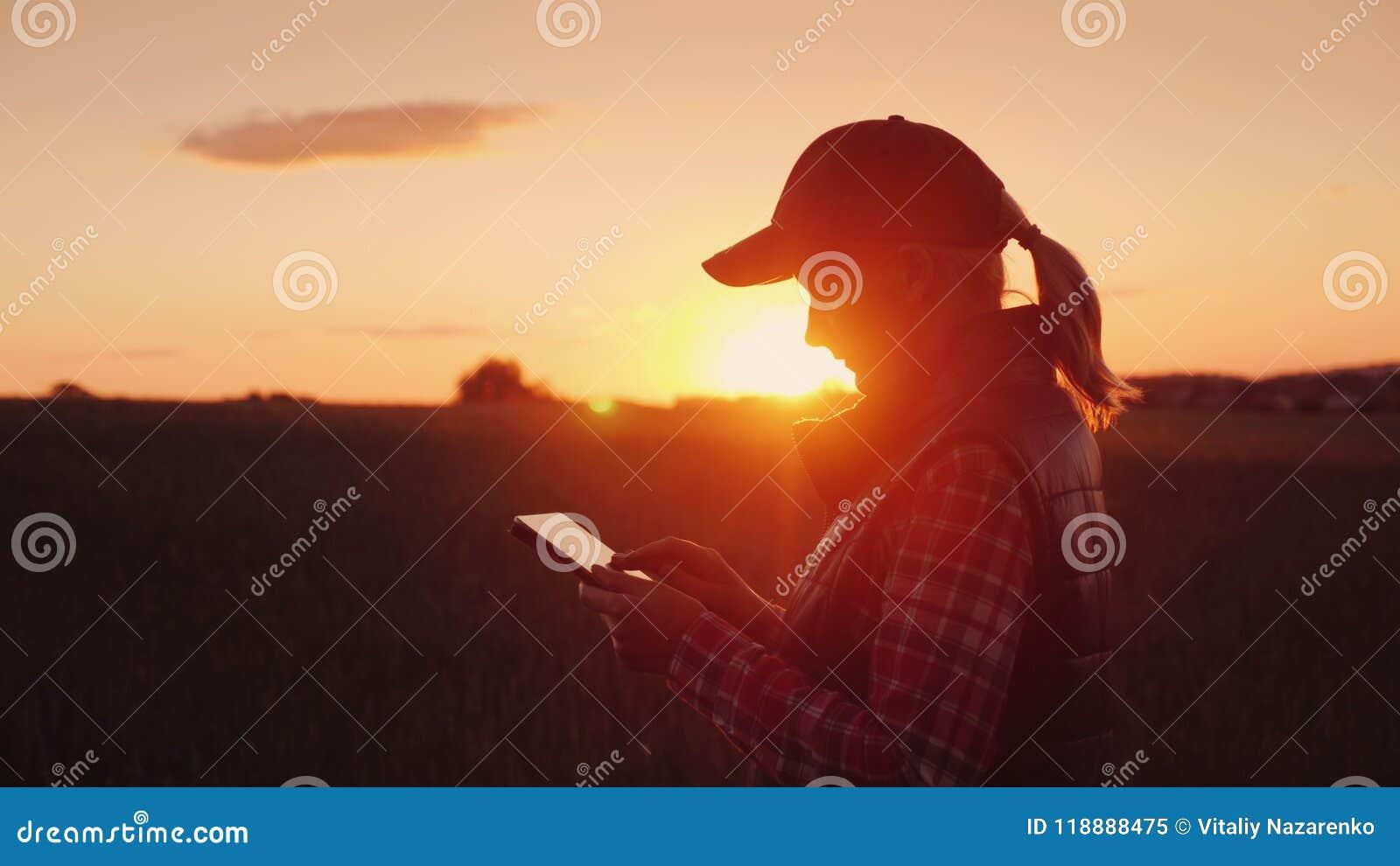 Fazendeiro da jovem mulher que trabalha com a tabuleta no campo no por do sol O proprietário de um conceito da empresa de pequeno