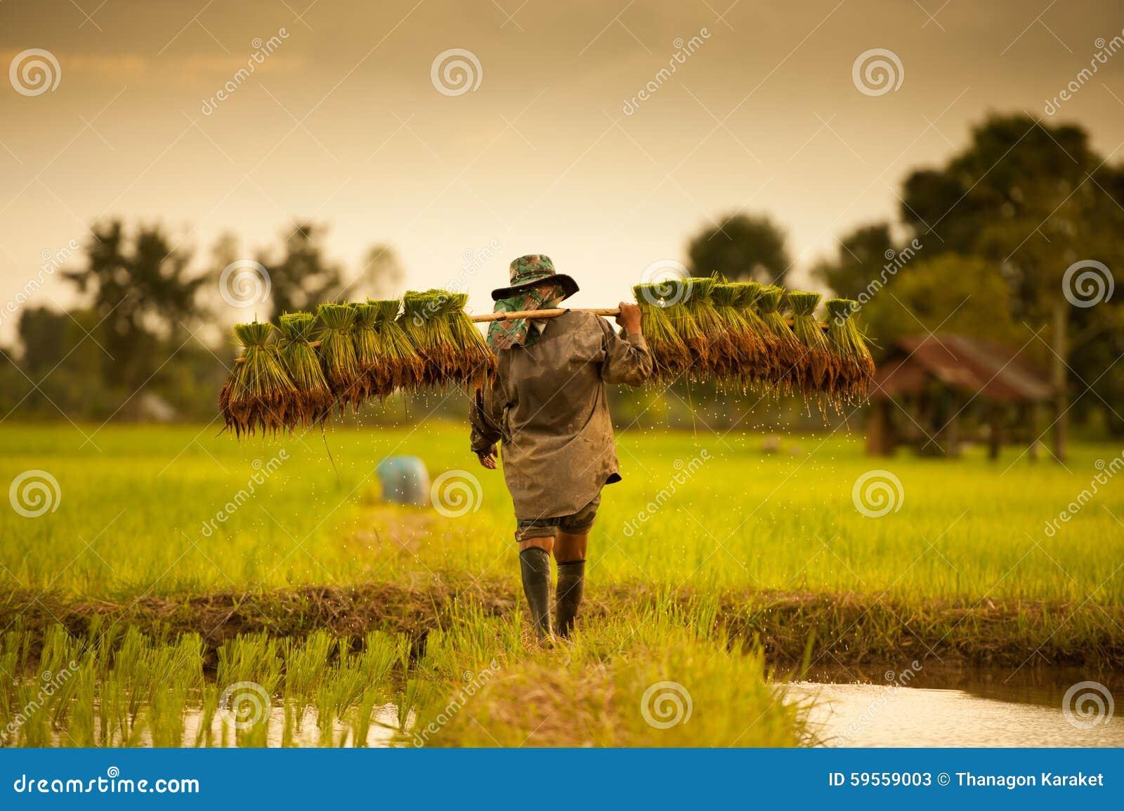 Fazendeiro em campos verdes