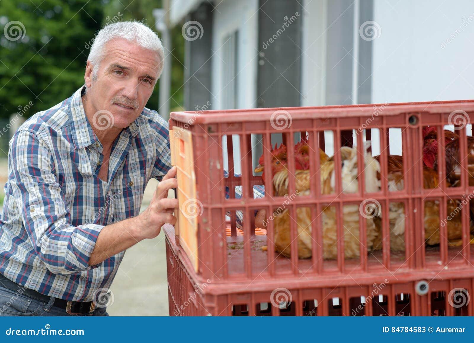 Fazendeiro maduro que empurra galinhas das caixas