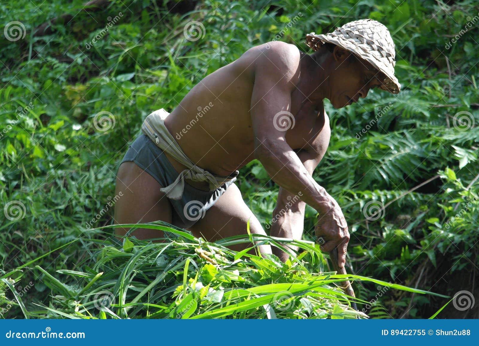 Fazendeiro no terraço Paddy Field do arroz de Ubud