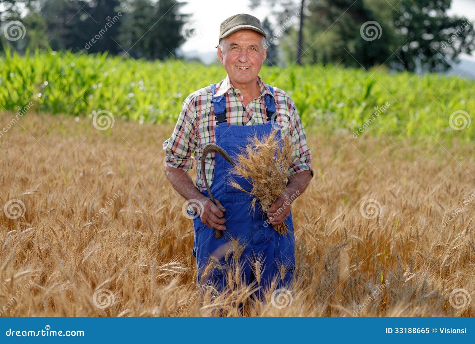 Fazendeiro orgânico que está em um campo de trigo