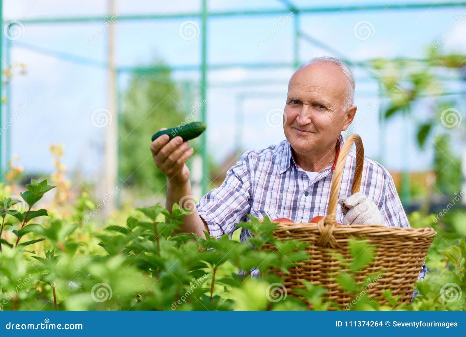 Fazendeiro orgulhoso Presenting Ripe Cucumbers