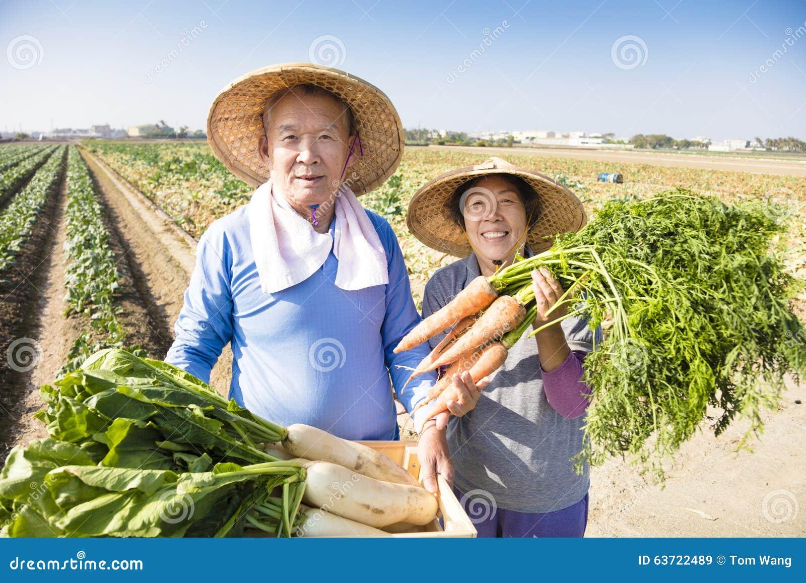 Fazendeiro superior feliz com muitas cenouras à disposição
