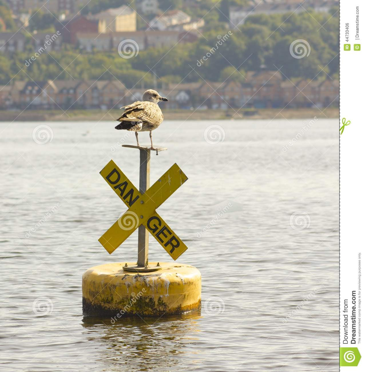 Fearless Bird Baby Seagull Danger Sign Stock Photo 44733406