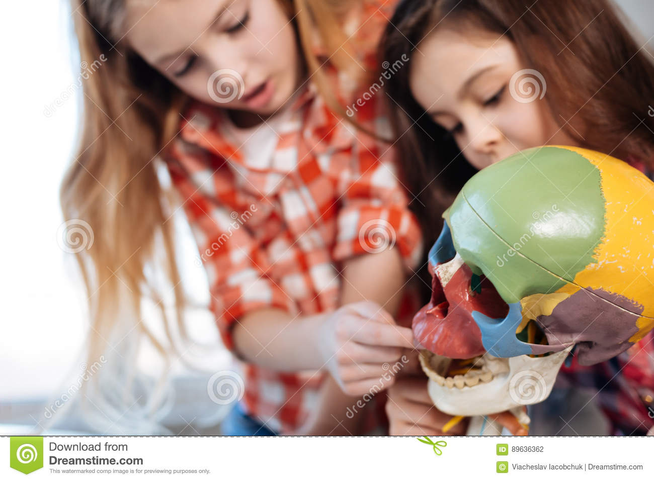 Fearless Charming Ladies Touching A Plastic Skull Stock Photo ...