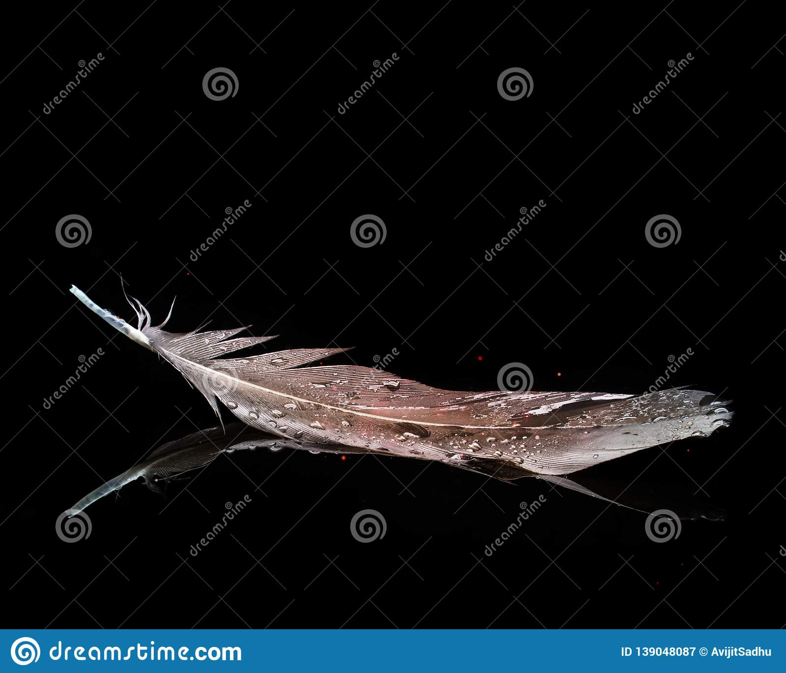 Feather In Black Background.