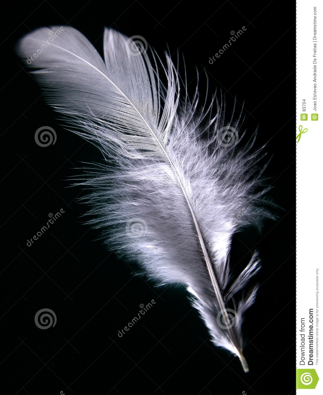Feather of my chicken