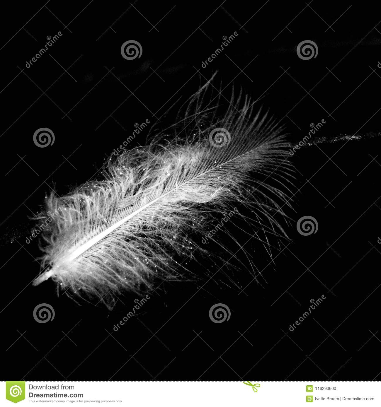 When Feathers Appear Angels Are Near Stock Photo Image Of Dreamy