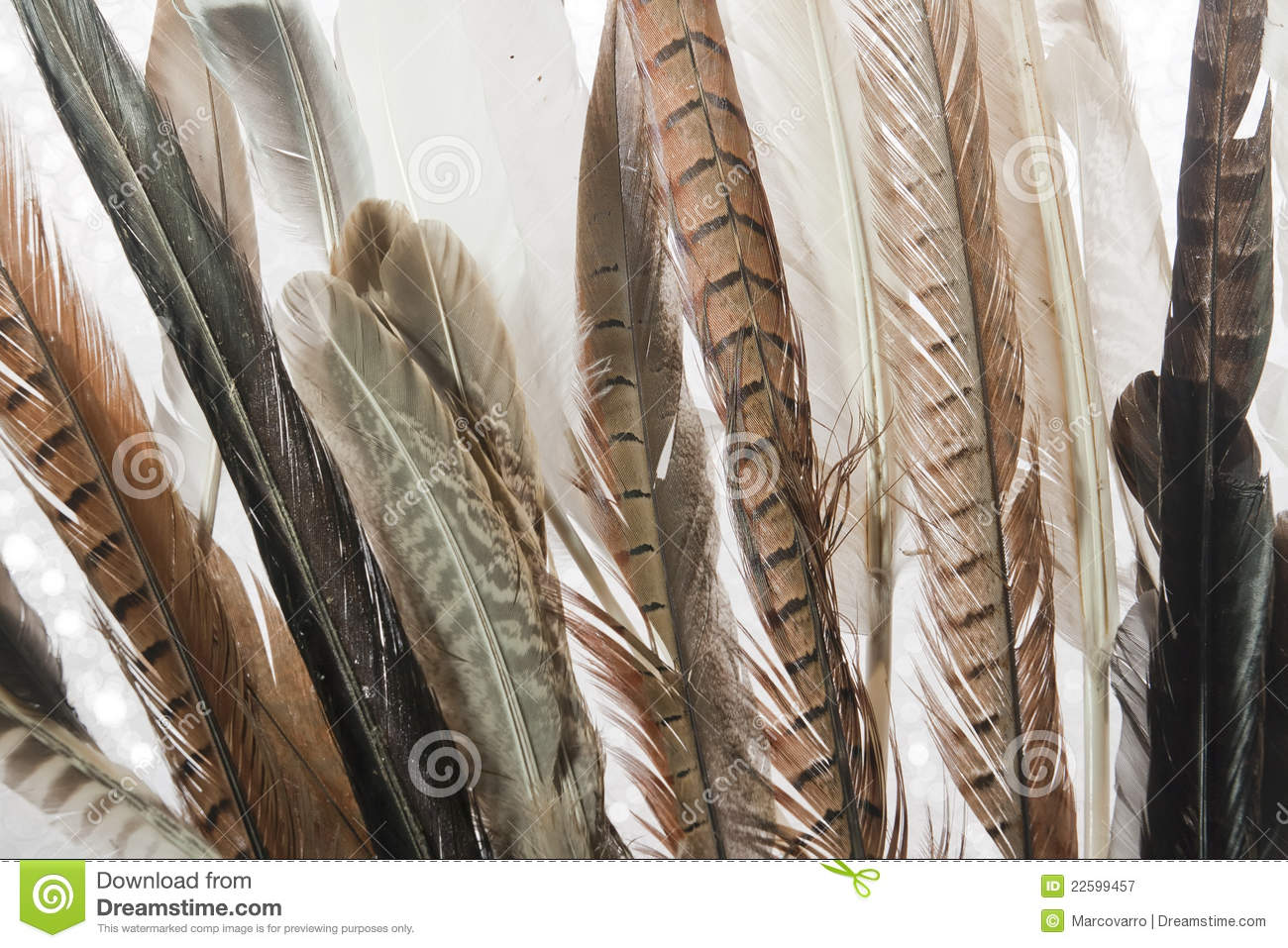 Feathers Close Up Royalty Free Stock Photography - Image ...