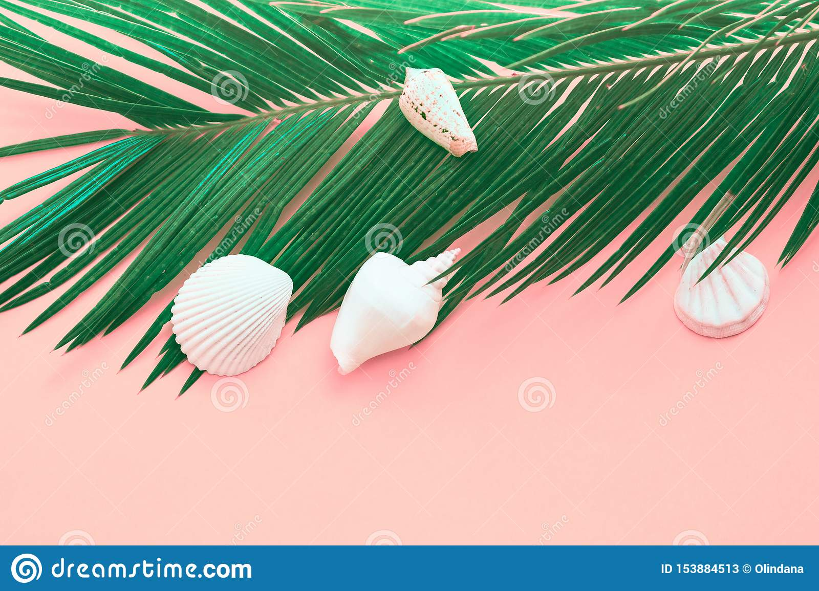 Feathery green palm leaf white sea shells on pink background. Summer tropical nautical creative concept. Poster banner for spa