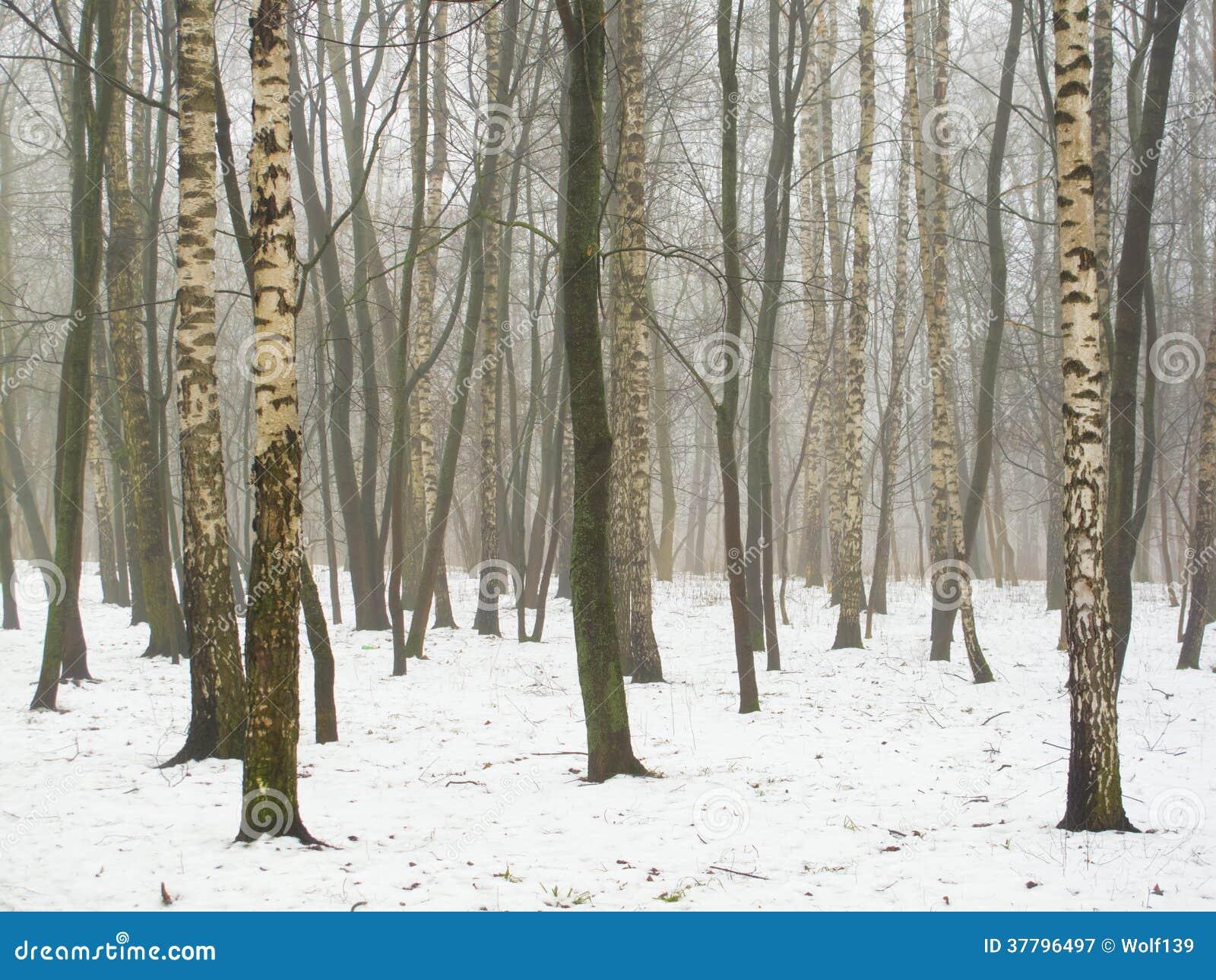 Februar-Waldung im Nebel und im Schnee