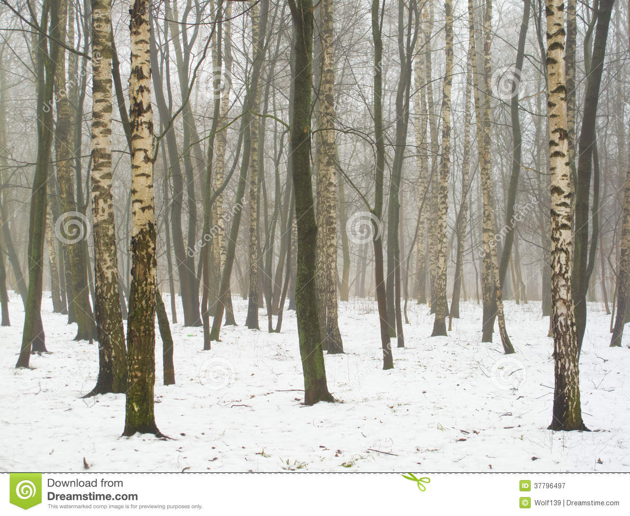 February grove in fog and snow