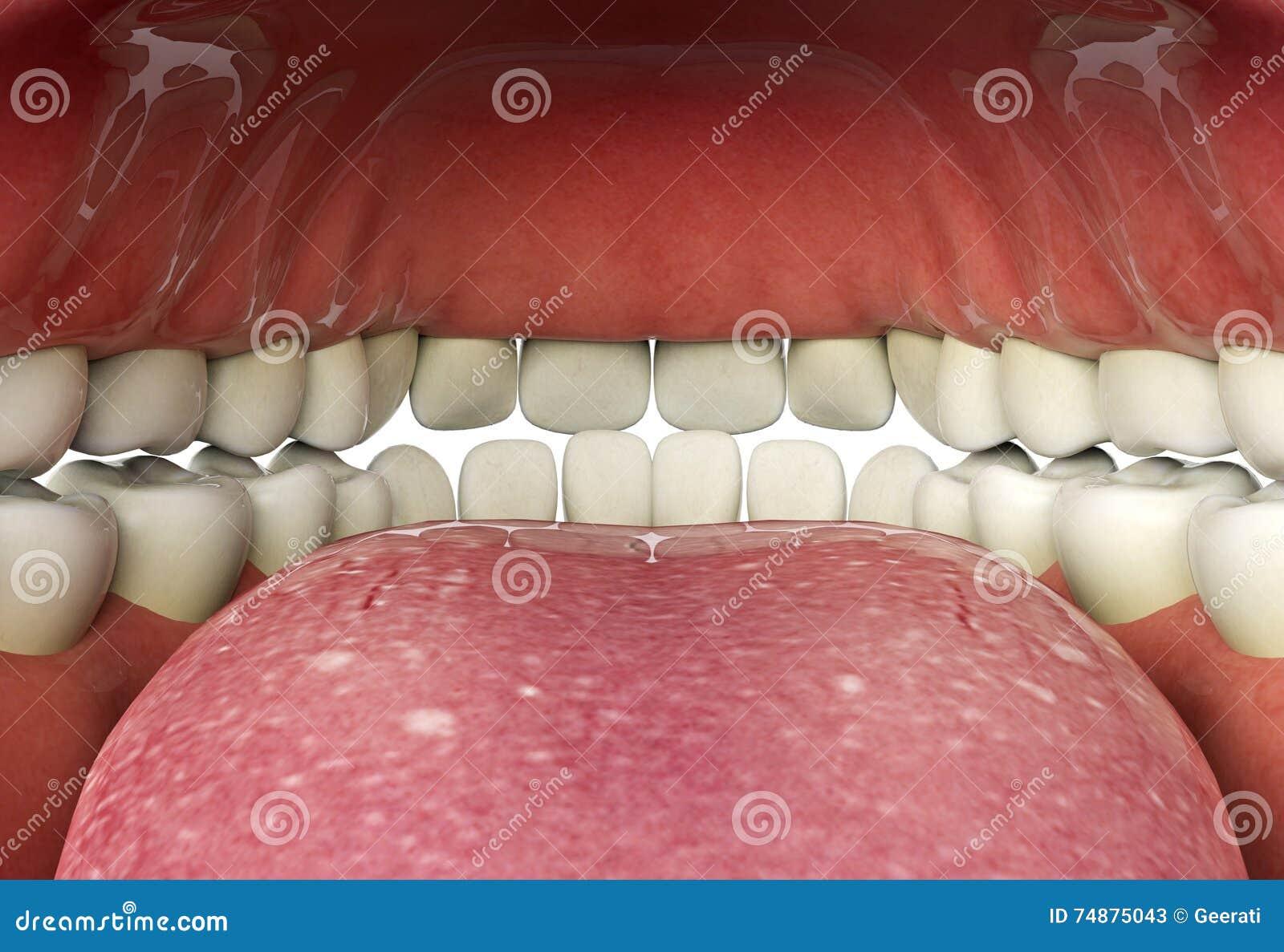 Feche acima da boca humana interna, conceito oral da saúde