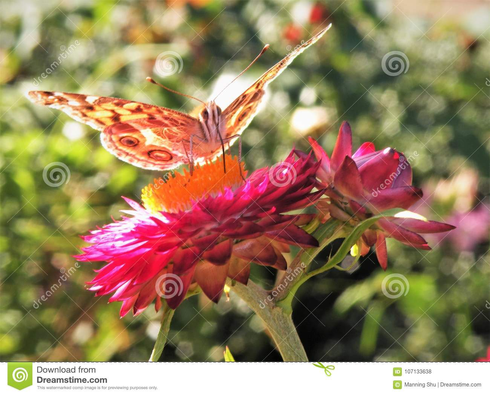 Feche acima da borboleta na flor