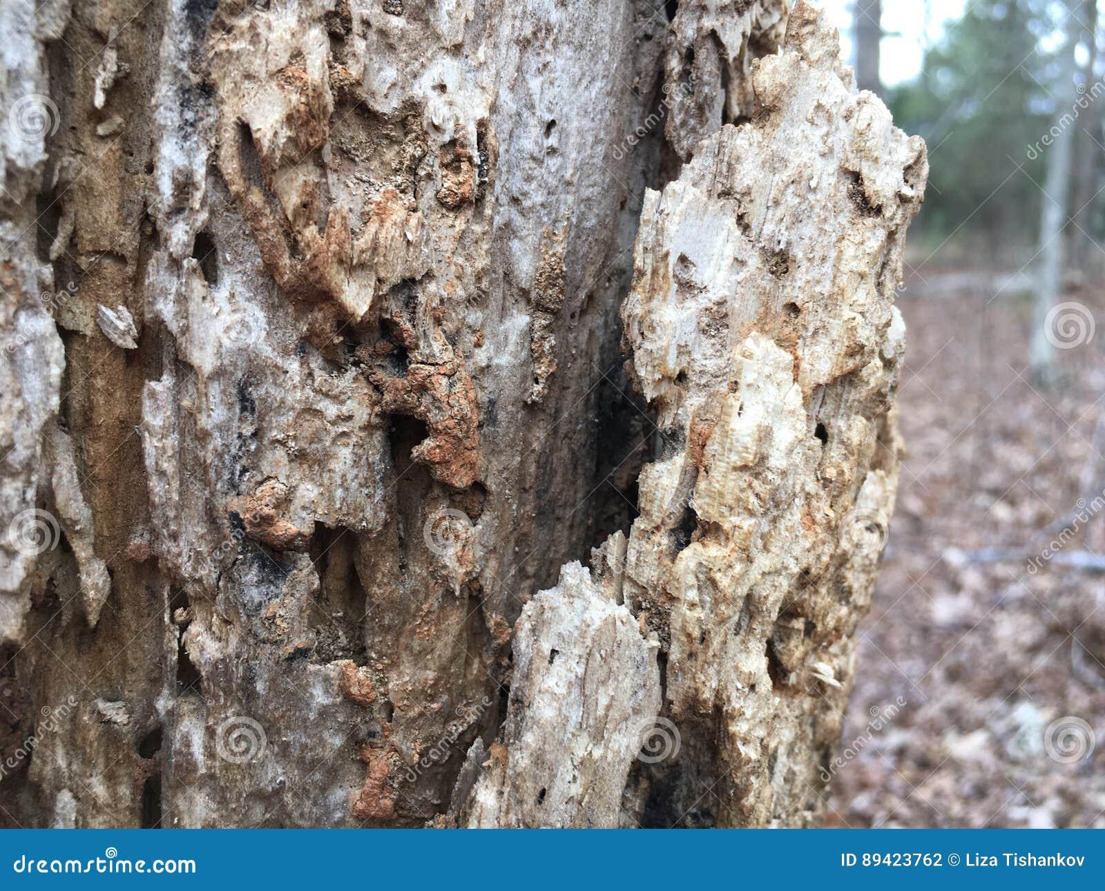 Feche acima da casca de árvore