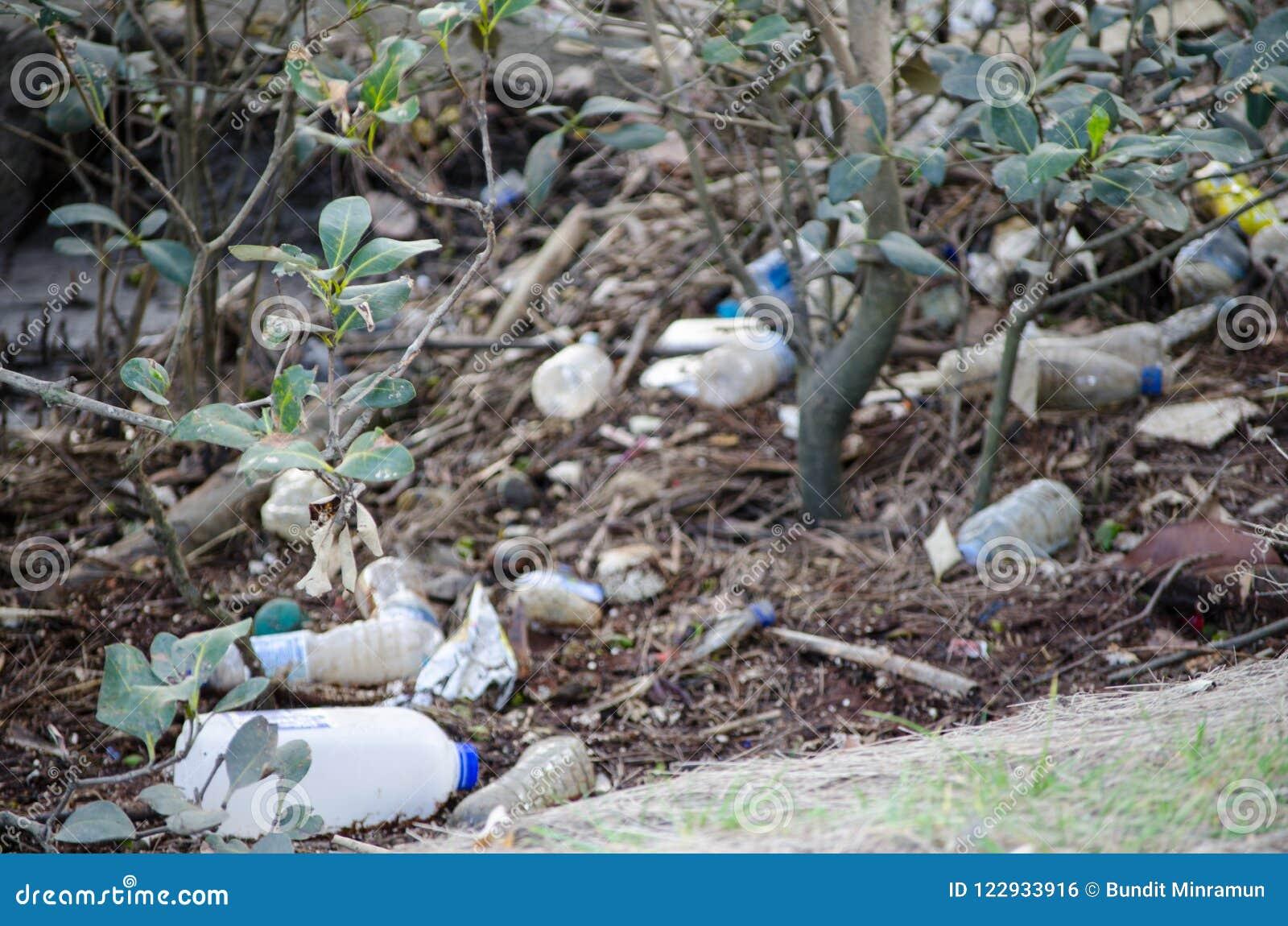 Feche acima da descarga de desperdícios em uma floresta dos manguezais