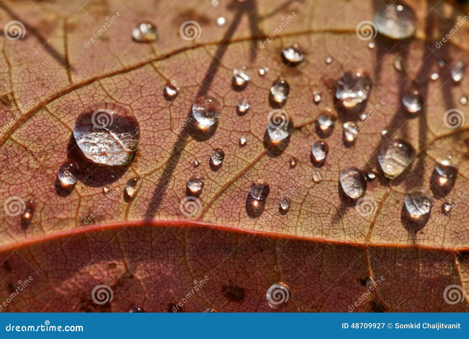 Feche acima da gota macro super da água do tiro na folha e na flor