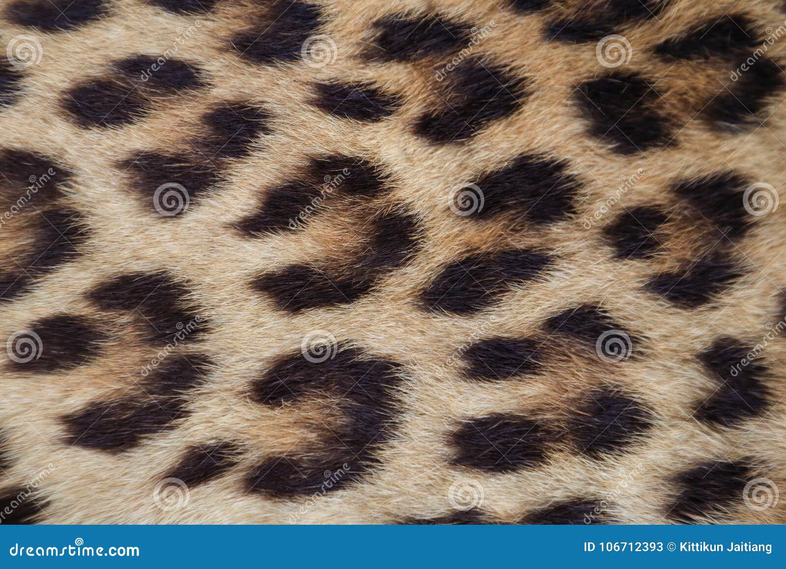 Feche acima da pele amarela do leopardo