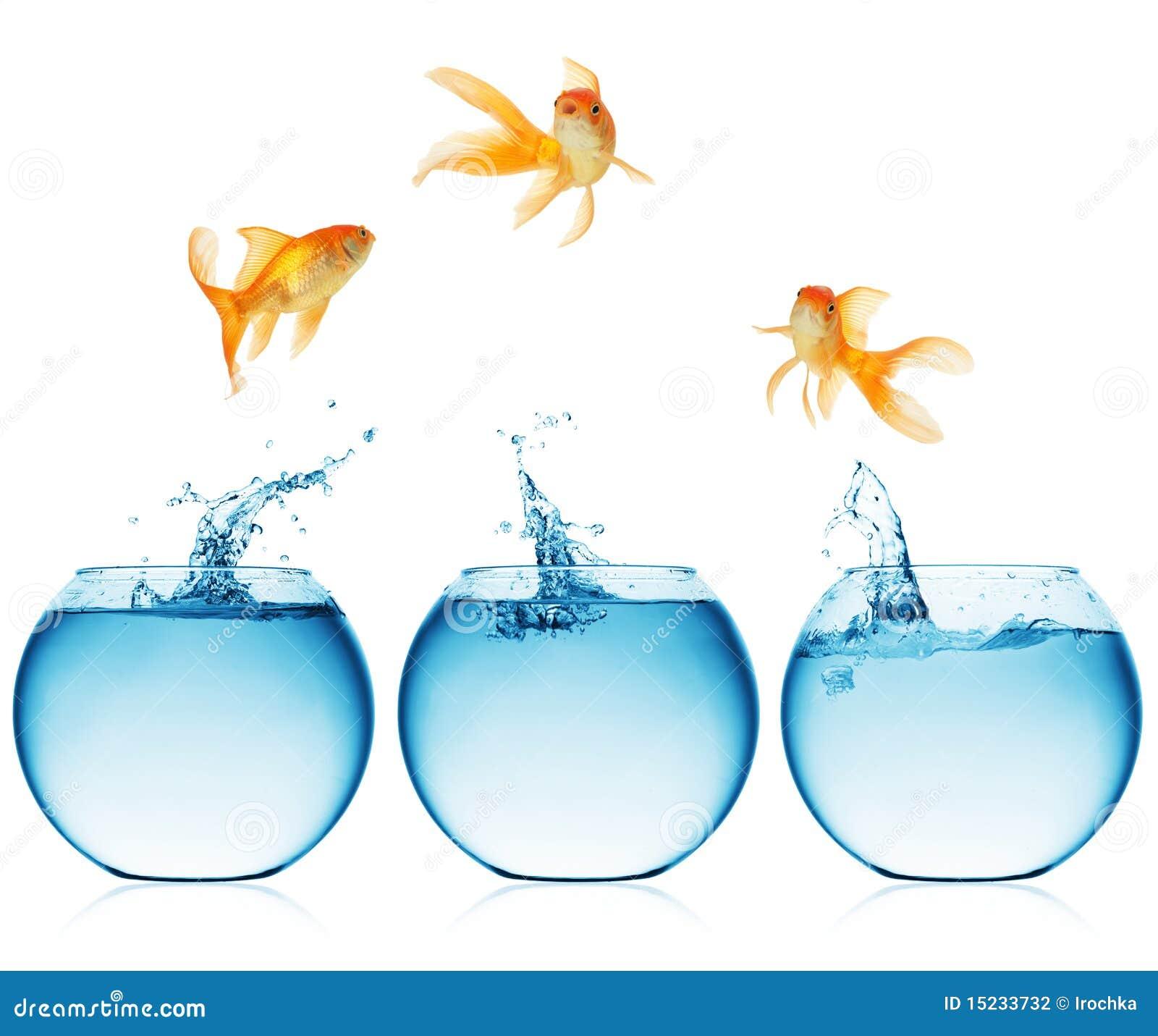 Feche acima da vista da bacia dos peixes isolada