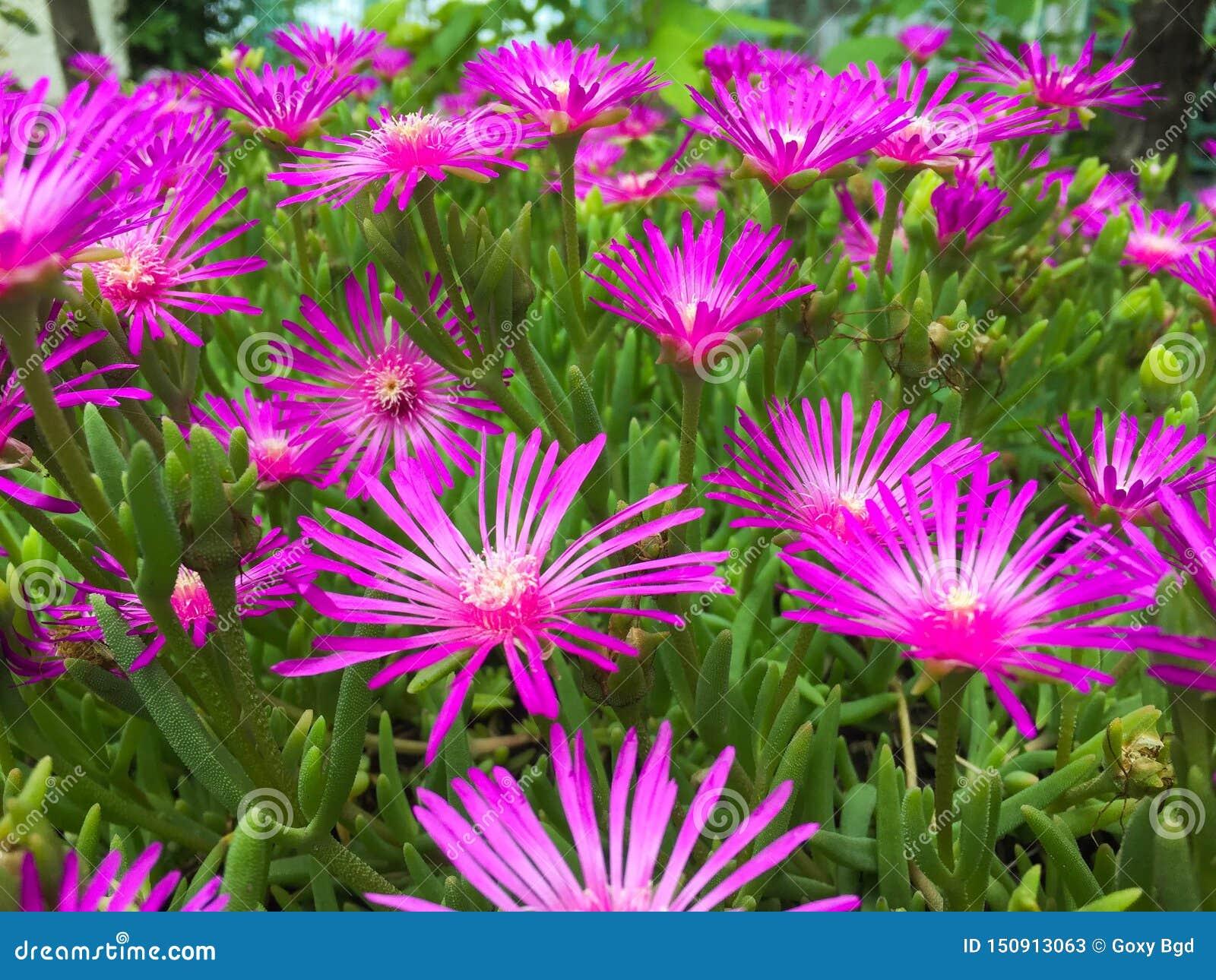 Feche acima das flores roxas
