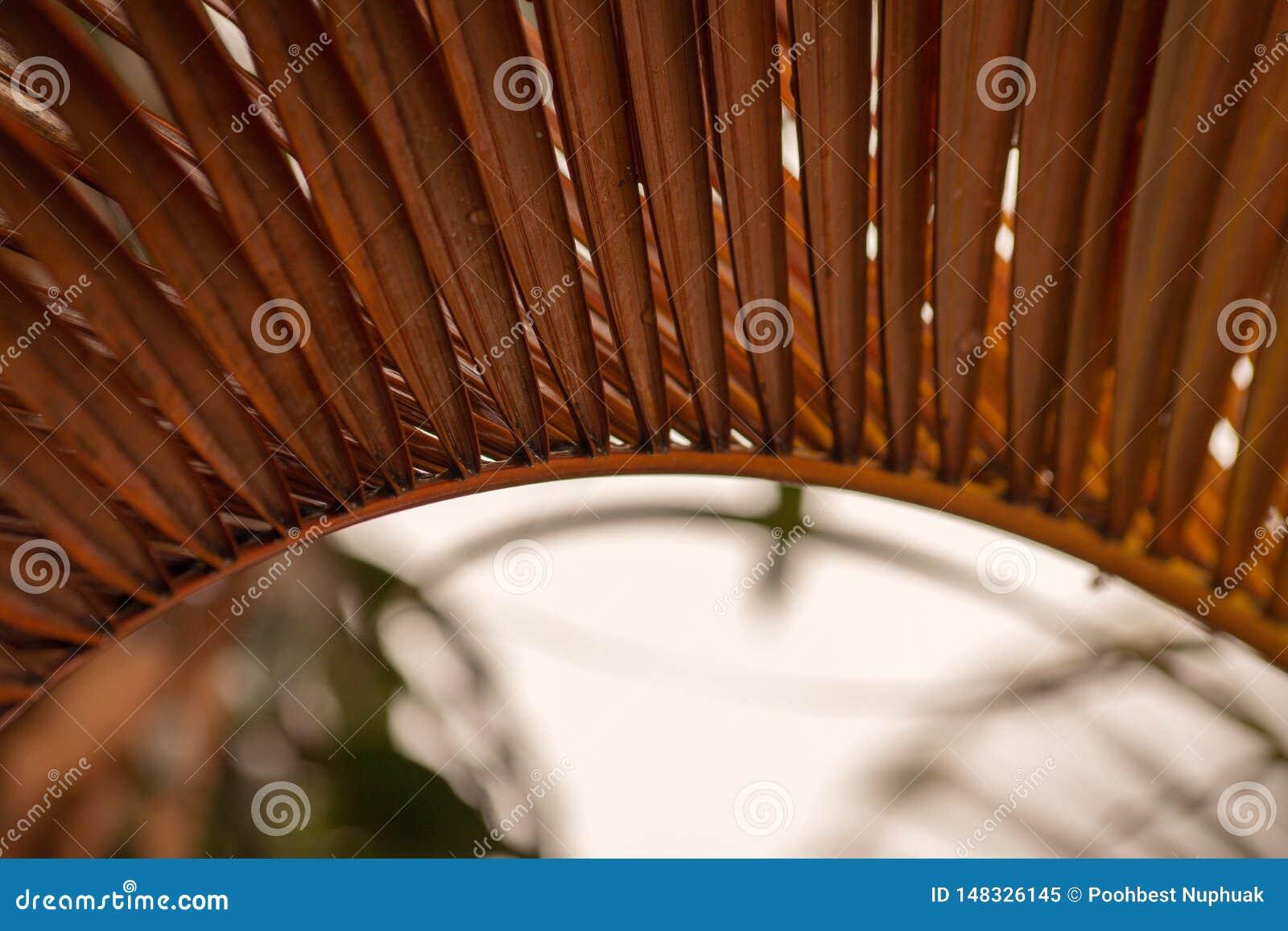 Feche acima das folhas de palmeiras secadas