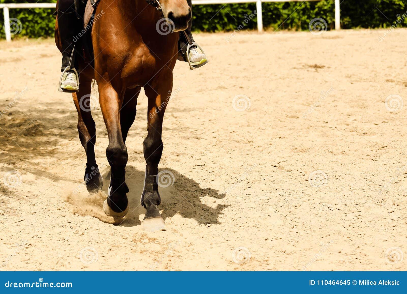Feche acima de trotar dos cascos do cavalo