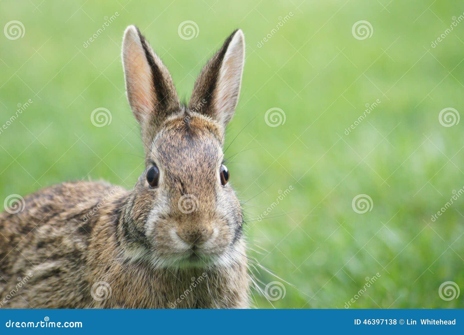 Feche acima do coelho