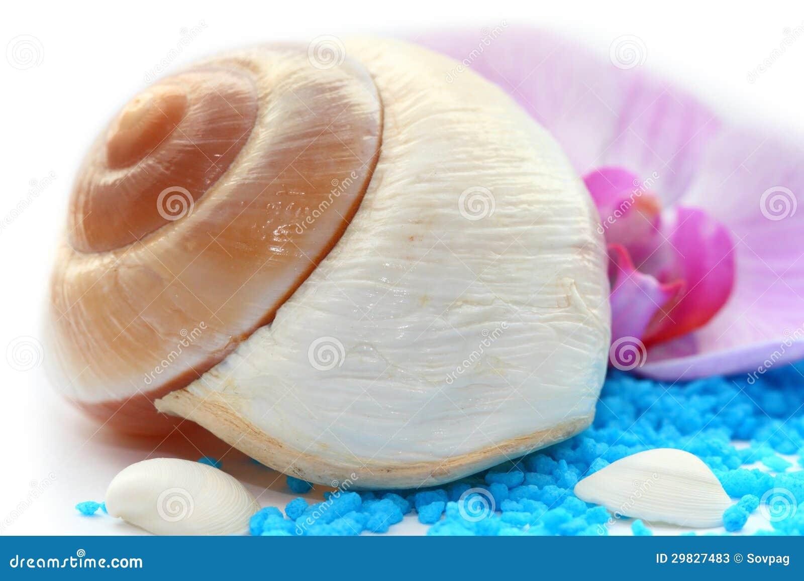 Conch branco
