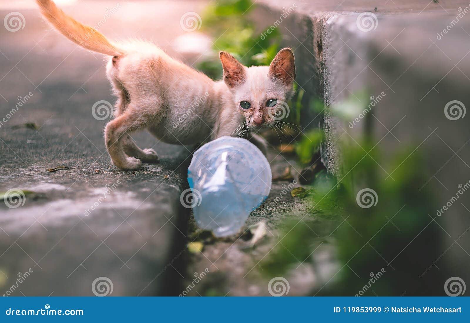 Feche acima do gatinho ou do gato disperso pobre magro pequeno