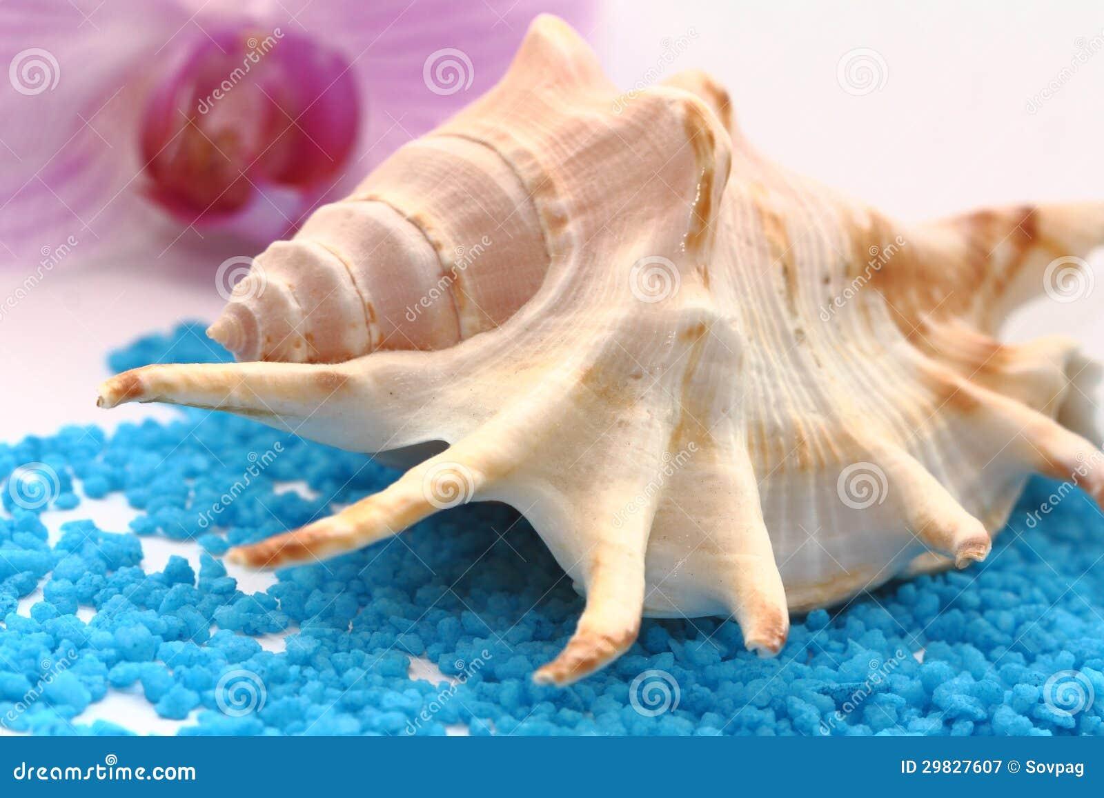 Seashell de Brown