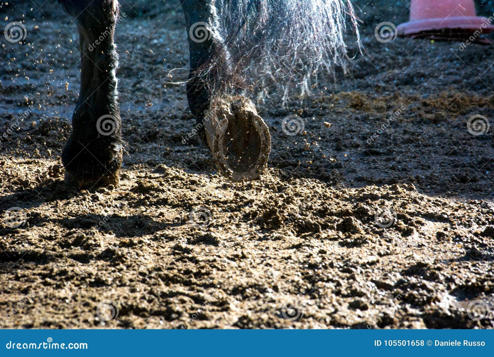 Feche acima dos cascos do cavalo durante o galope