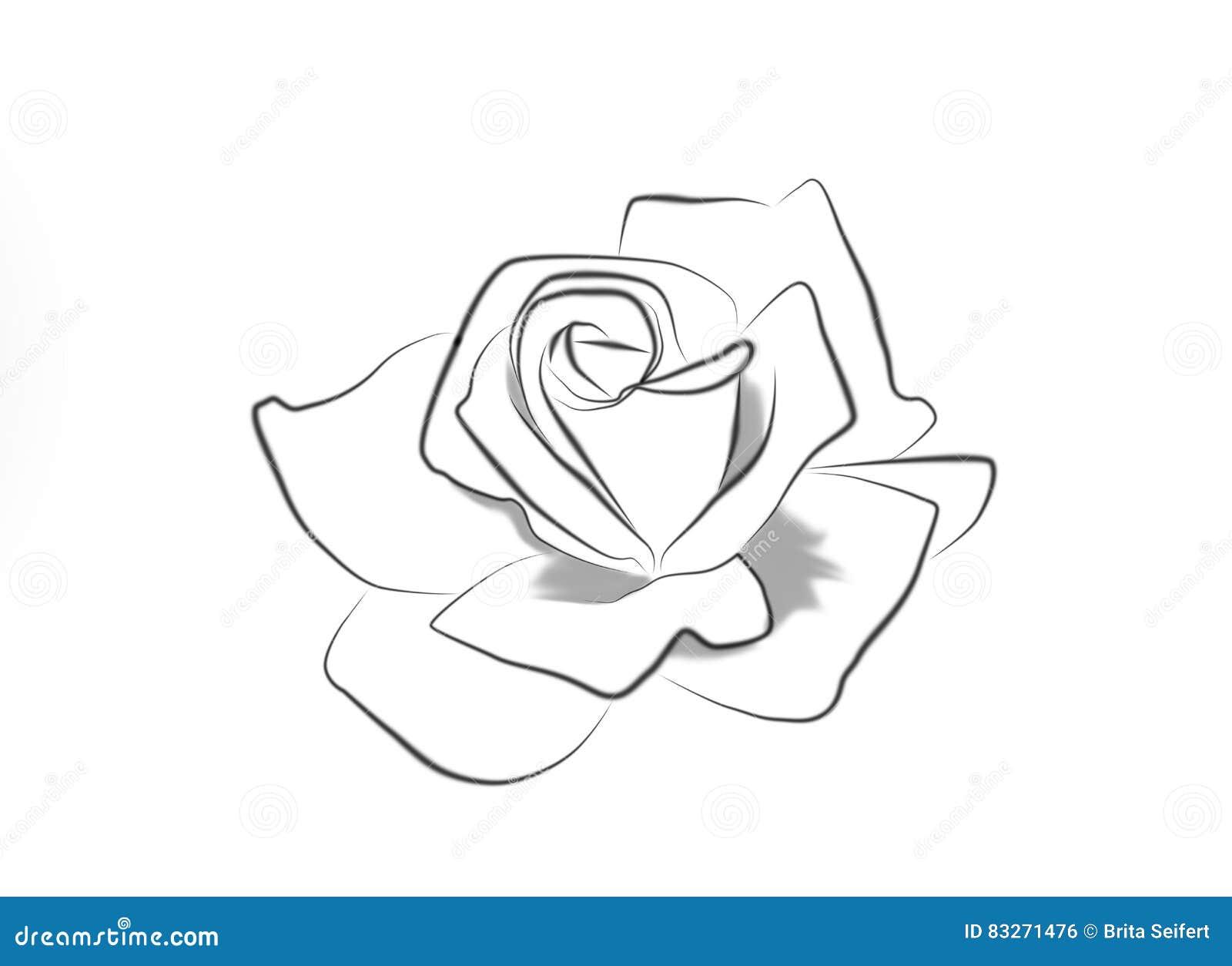 Federzeichnung einer Rose