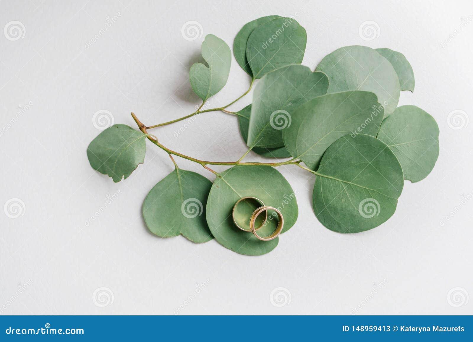 Fedi nuziali sulle foglie dell eucalyptus