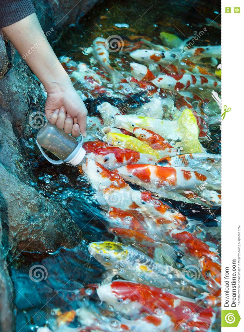 Feed koi milk bottle royalty free stock images image for What to feed baby koi