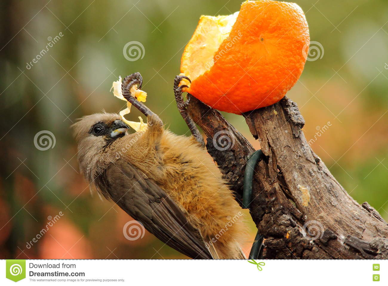 Feed Wild Birds In Times Of Drought For Conservation Purposes Stock ...