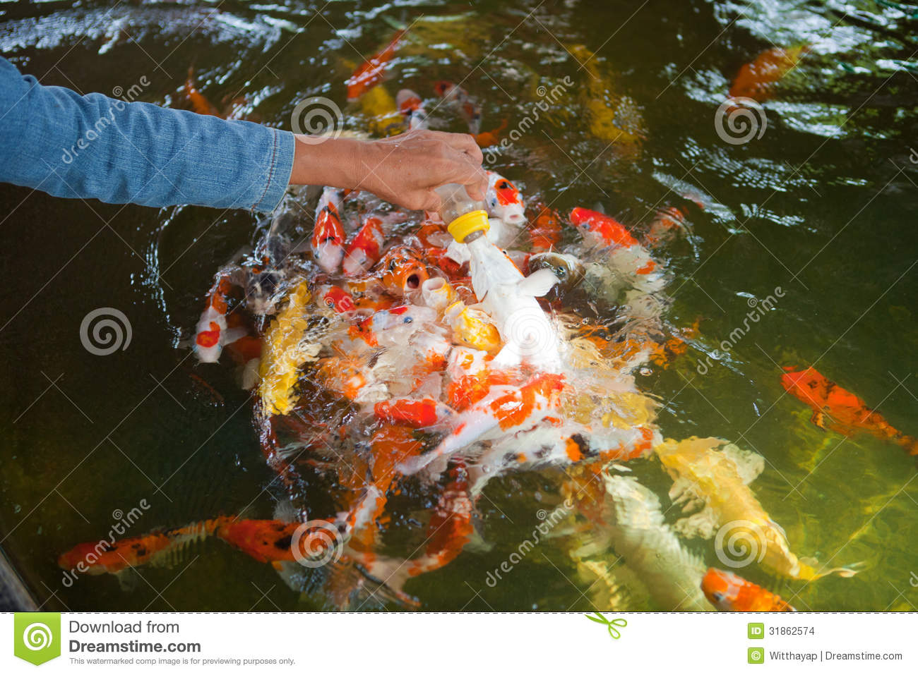Feeding carp fish stock images image 31862574 for What to feed baby koi