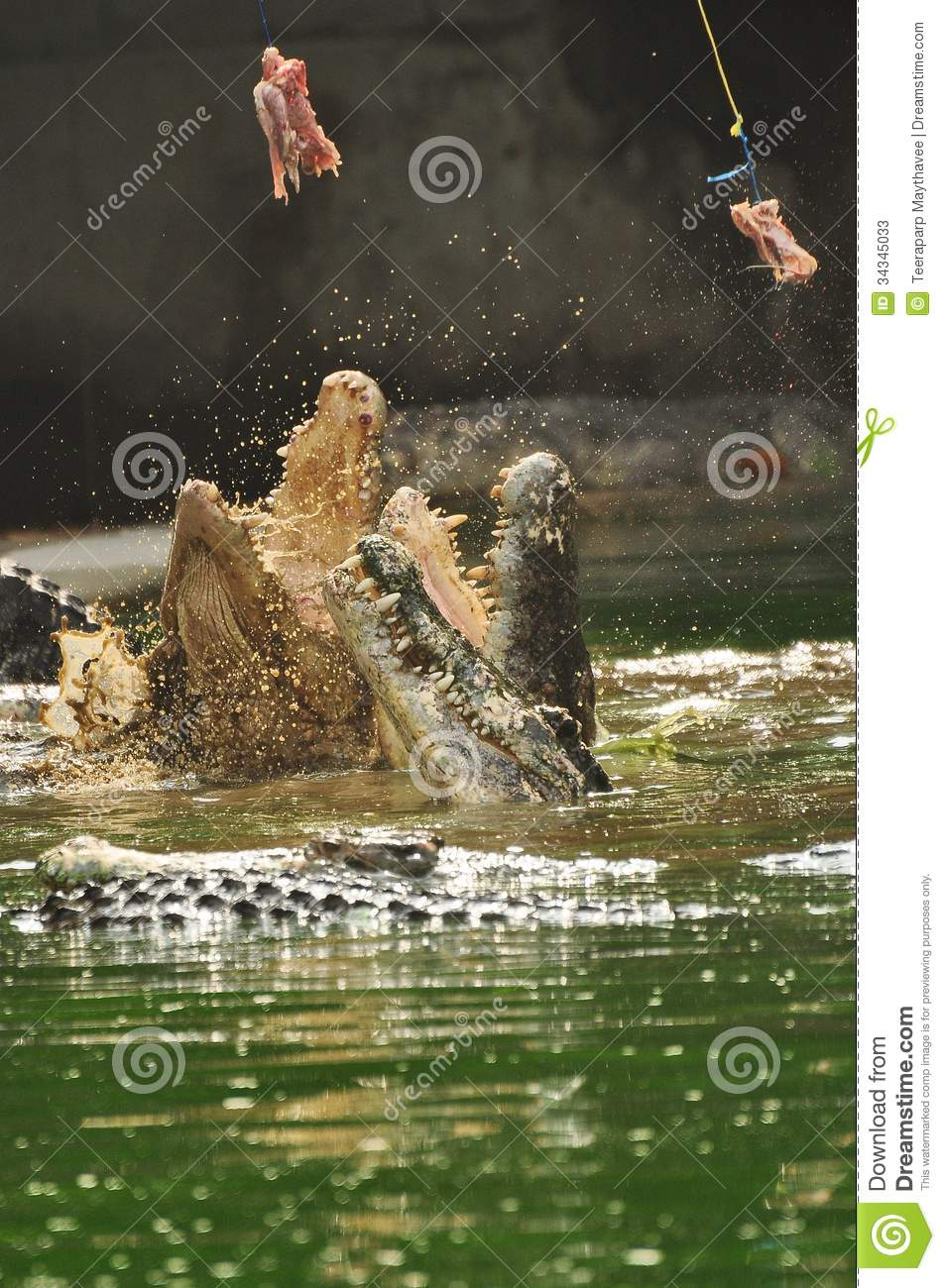 Feeding Crocodile Stock Photos - Image: 34345033