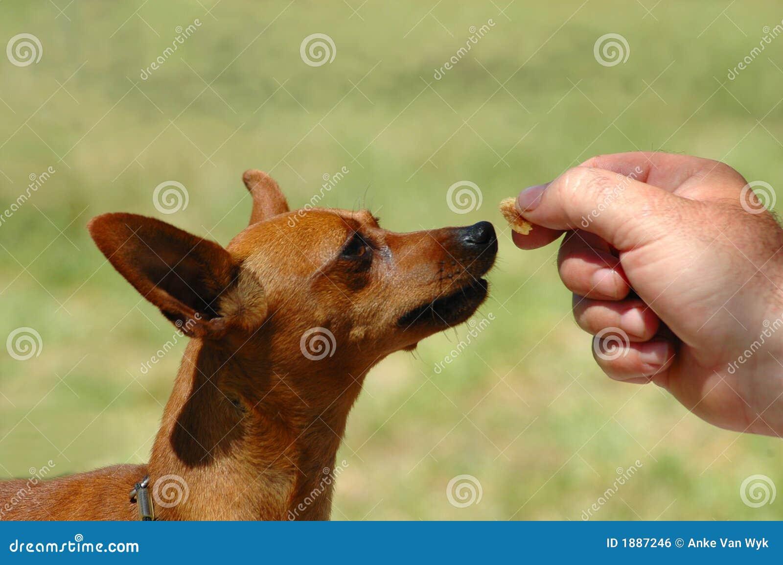 Feeding a dog