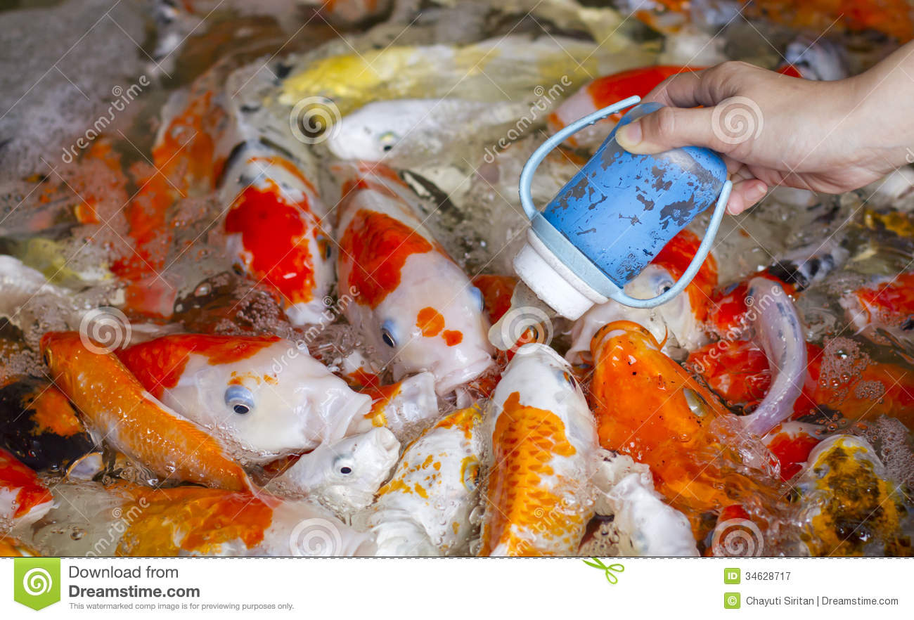 Feeding fish royalty free stock photography image 34628717 for How to feed fish