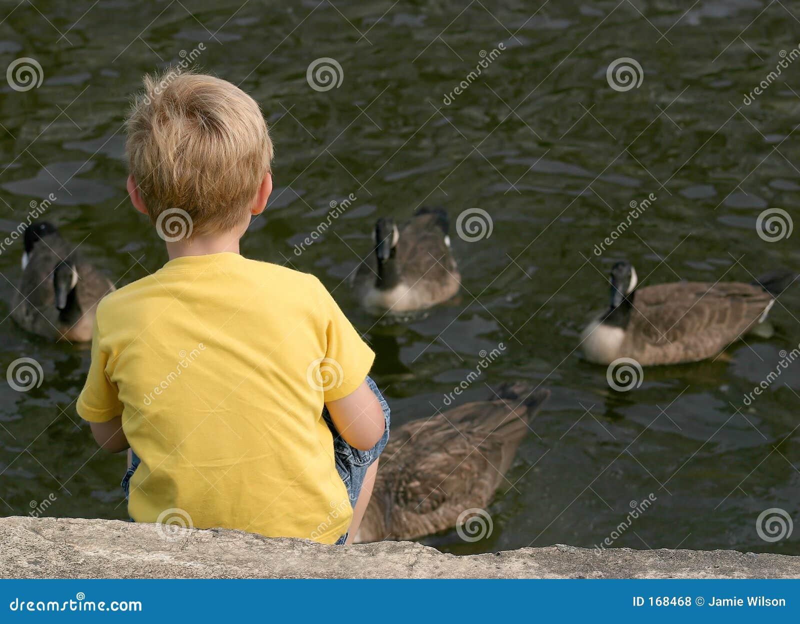 Feeding The Geese