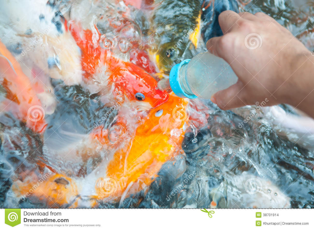 Feeding koi fish with milk bottle stock images image for What to feed koi fish