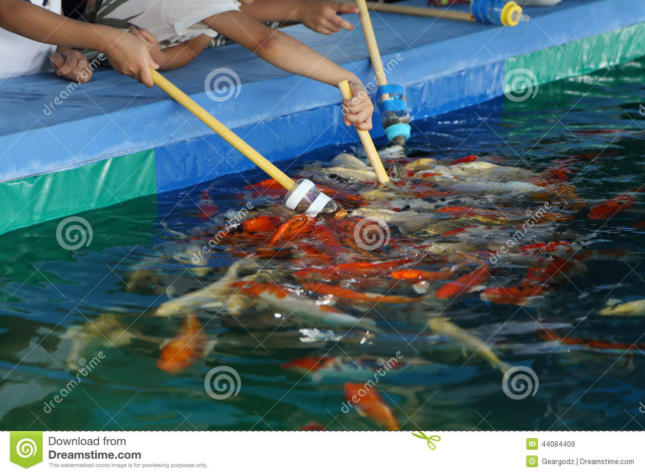 Feeding koi fish with milk bottle stock image image of for Koi carp farm
