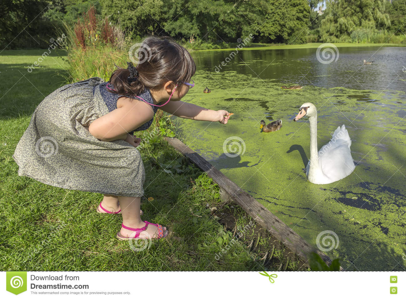 Feeding swans and ducks