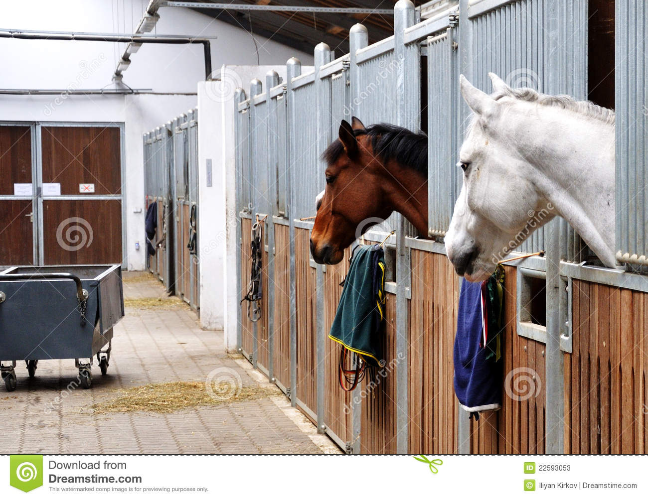 Feeding time for brown and white horse