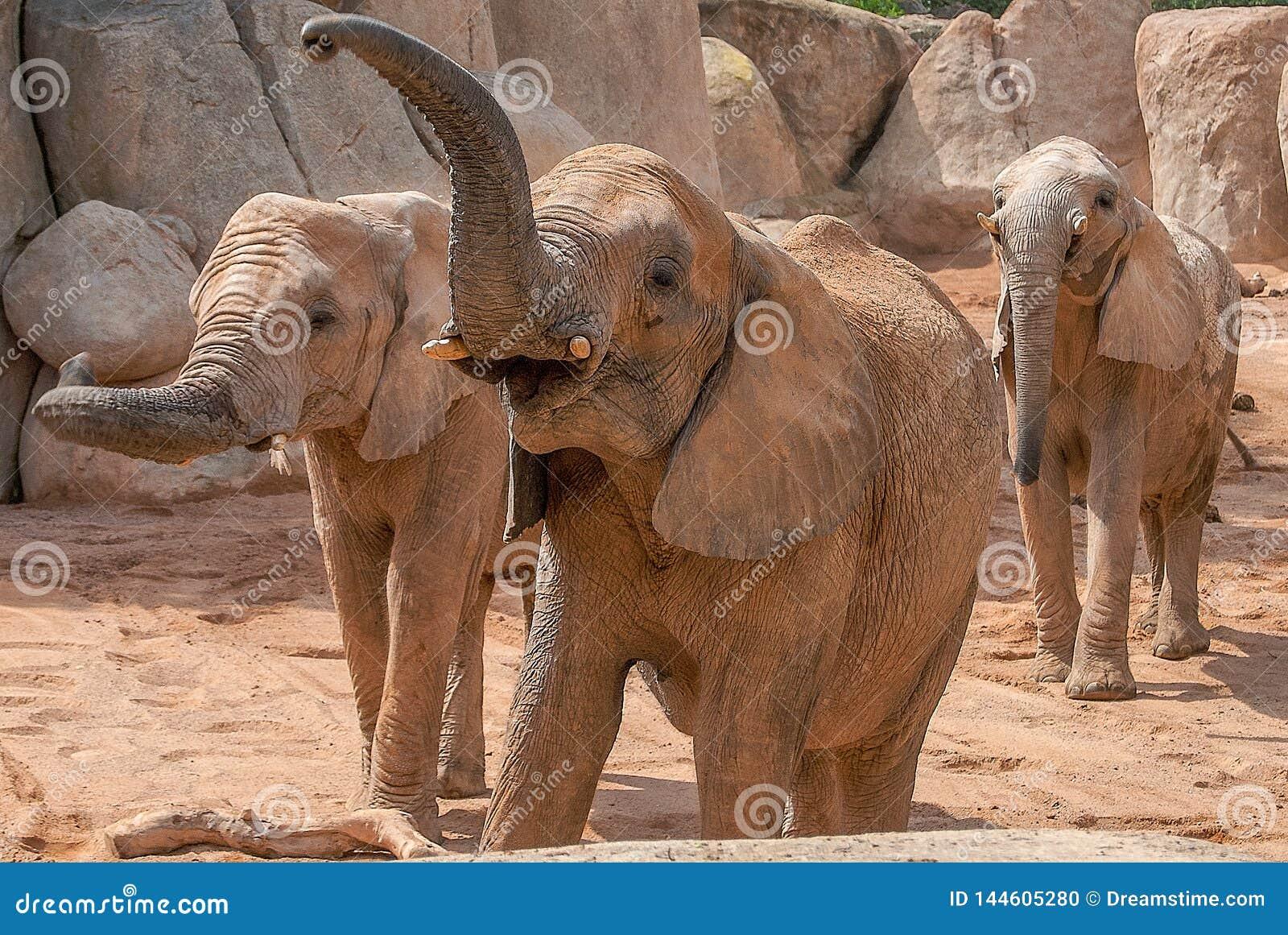 Feeding Time At Valencia Zoo