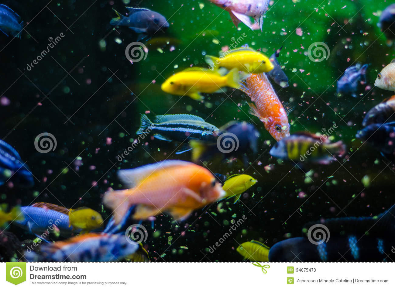 Feeding tropical fish stock image image of tank eating for Fish and pets unlimited