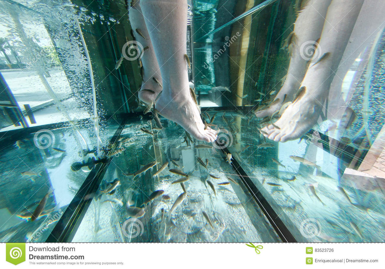 Fish tank in spanish - Feet On A Garra Rufa Fish Tank In A Spa And Wellness Festival And Showroom Fair