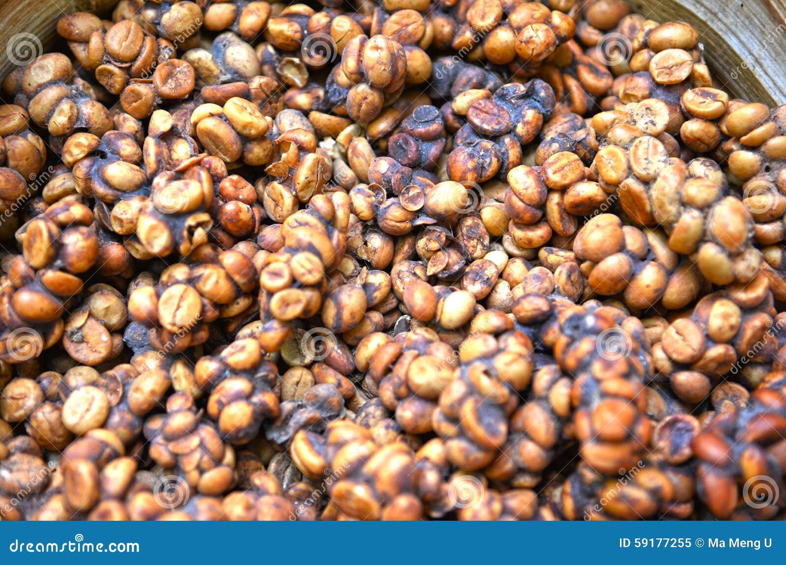 Feijão de café indonésio do luwak