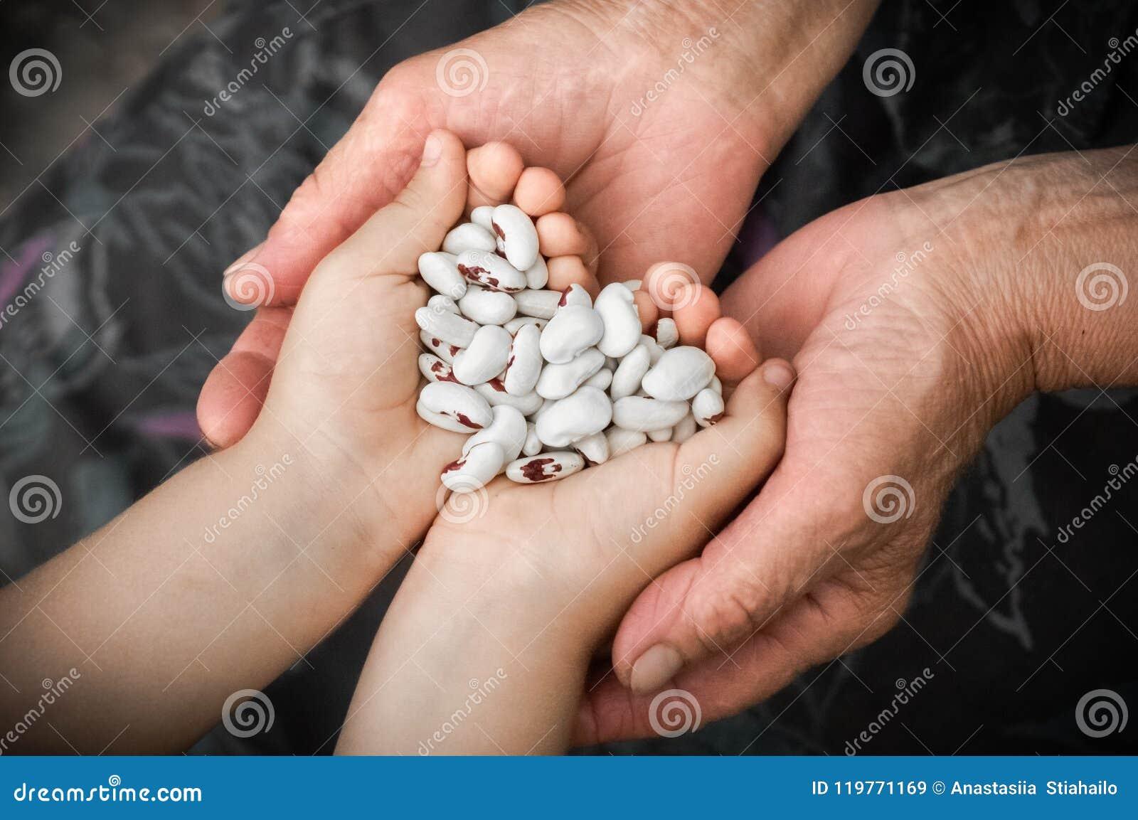 Feijão vermelho Feijões brancos com os pontos vermelhos nas mãos da avó e da menina, nas mãos dos vegetais Clouse-up